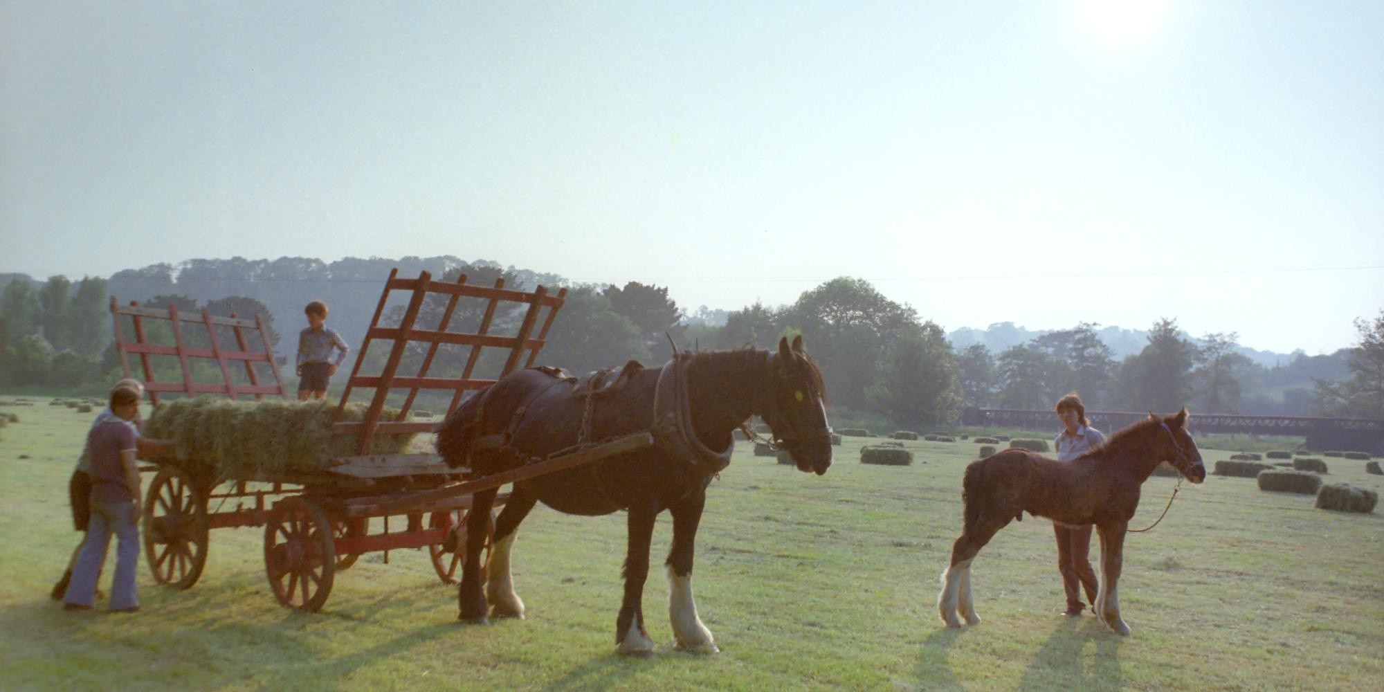 Collecting hay in Bickleigh